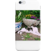 Hollywood with kittens iPhone Case/Skin