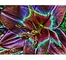 Multi - Colored Lily Photographic Print