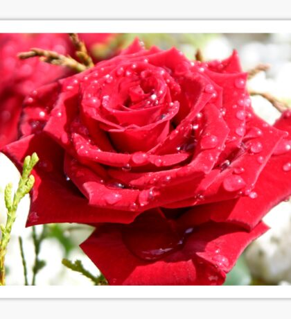 Red Rose, Raindrops and Sun Sticker