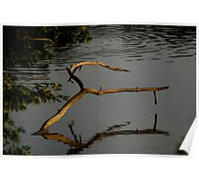 Branch inthe lake, Englewood Reserve, 2005 Poster