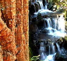 Bark Waterfall by Pippa Carvell