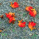 Red Flowers by Jim  Paredes