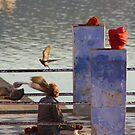 Thoughts Take Wing, Pushkar, Rajasthan, India by RIYAZ POCKETWALA