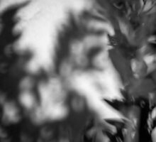 Plants and Shadows 02 by Kent DuFault