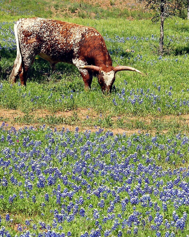 Texas Icons by Nick Conde-Dudding