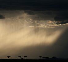 maasai rain by Dan A'Vard