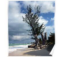 Seven Mile Beach, Grand Cayman, Caribbean  Poster