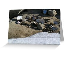 Now, That's A Lot Of Clams! Greeting Card
