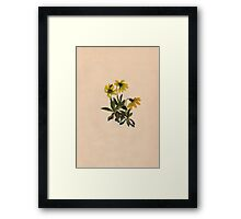 Lake Louise Arnica-Vintage Print-North American Wild Flower-Art Prints-Mugs,Cases,Duvets,T Shirts,Stickers,etc Framed Print