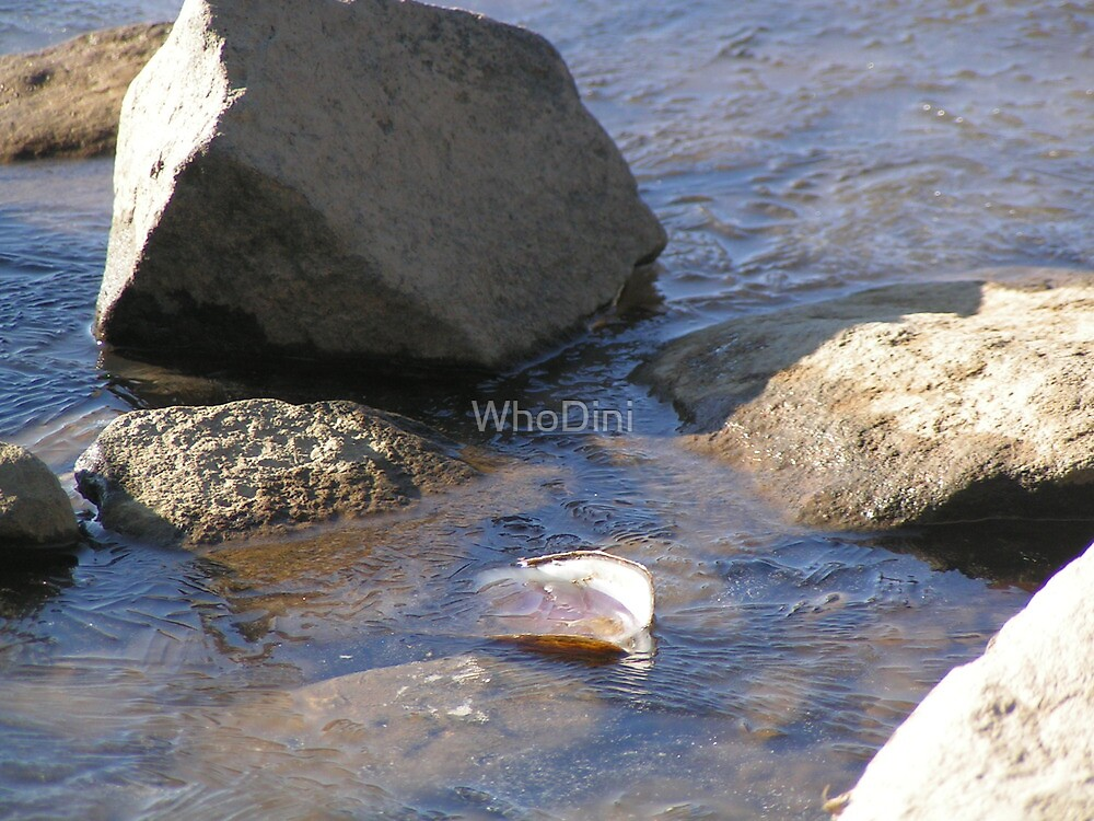 Fresh Water Bath by WhoDini