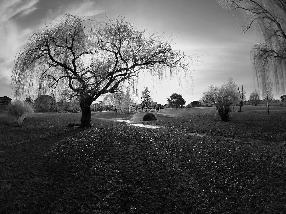 """Frosty Winter Park in Black and White """"Simply Stated"""" by iseezu"""