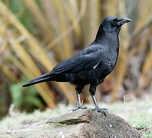 Crow Posed Before Yellow Stems by Wolf Read