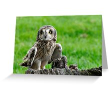 Short Eared Owl Asio flammeus Greeting Card