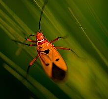 Red Bug & the Green Barley Leaves by Mukesh Srivastava