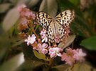 Rice Paper Butterfly by goddarb
