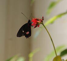 Butterfly II by Viki B