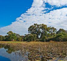 Okavango Delta by Konstantinos Arvanitopoulos