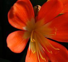 Orange Glory by Tina Longwell