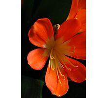 Orange Glory Photographic Print