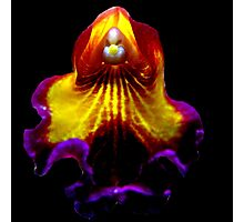 Red Riding Hood - A New Perspective on Orchid Life Photographic Print