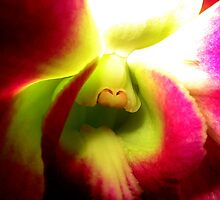Sensing - A New Perspective on Orchid Life by ©Ashley Edmonds Cooke