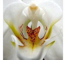 Resident Area 51 Alien - A New Perspective on Orchid Life Photographic Print