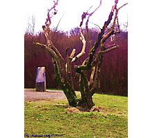 Contorted Limbs Photographic Print