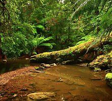 Julius River  far nor west Tasmania , Australia by phillip wise