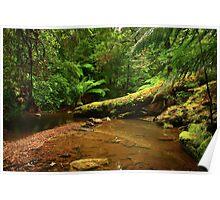 Julius River  far nor west Tasmania , Australia Poster
