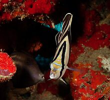 Butterfly and file fish, Aruba, 2009 by jackmbernstein