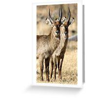 Horned Symmetry Greeting Card