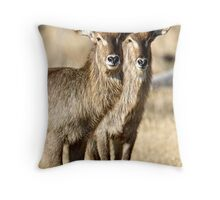 Horned Symmetry Throw Pillow
