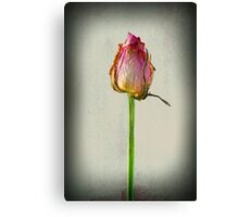 Old Rose on Paper Canvas Print