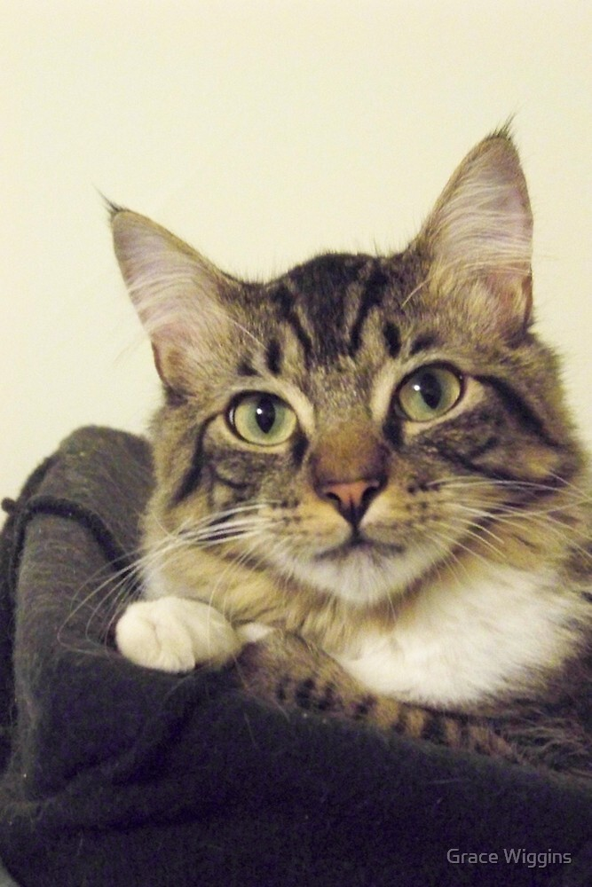 Back-to-School Cat by Grace Wiggins