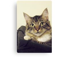 Back-to-School Cat Canvas Print