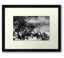 Berries in black and white Framed Print