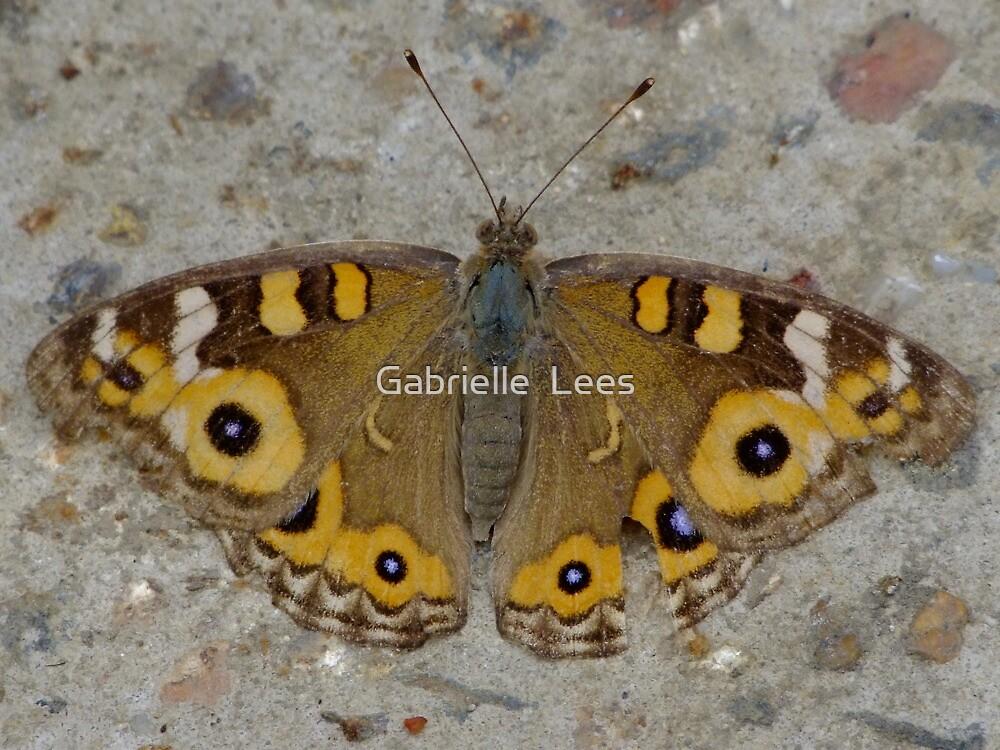 Meadow Argus Butterfly - Junonia villida by Gabrielle  Lees