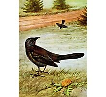Purple Grackle Bird Art Photographic Print