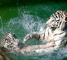 Tigers in play by kgphoto