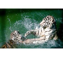 Tigers in play Photographic Print