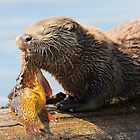 River Otter  by DavidQuanrud