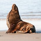 New Zealand Sea Lion 1 by Werner Padarin