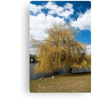 Willow Tree in Autumn Canvas Print
