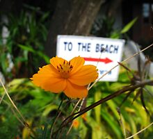 To The Beach by Pippa Carvell