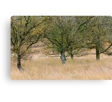 Silver Birch Trees Cannock Chase Canvas Print