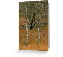 Silver Birch Trees Cannock Chase Greeting Card