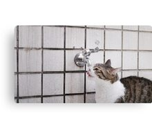 Cat drinking from a tap Canvas Print