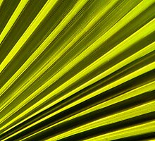 Frond Fan by abmay