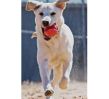 Fetch Photographic Print