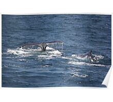 Whale Watching Poster